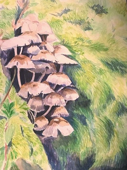 The%2520mushrooms%2520are%2520really%252