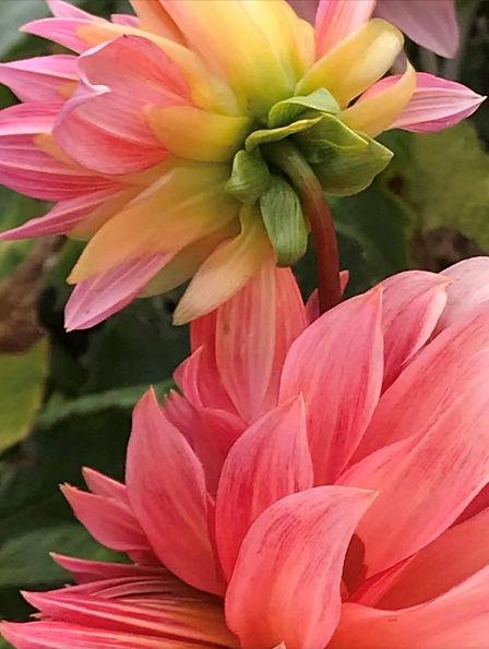 Pink Sorbet Bliss.jpg