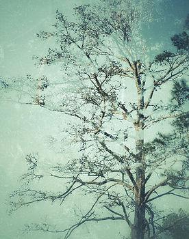 1 Whispering Pine.jpg