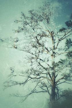 1 Whispering Pine