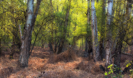 early spring light in woodland