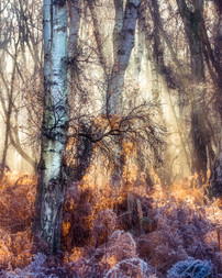 wood flooded with winter morning light