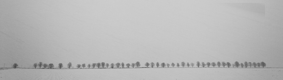 45 trees in falling snow