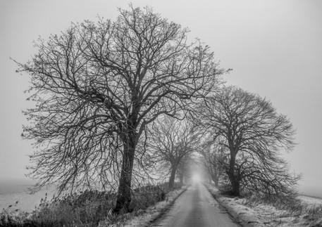 misty morning, end of december.