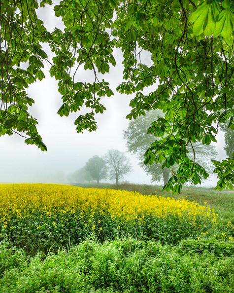 a foggy spring morning