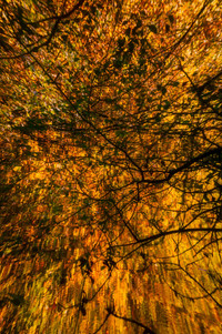 immersed in autumn