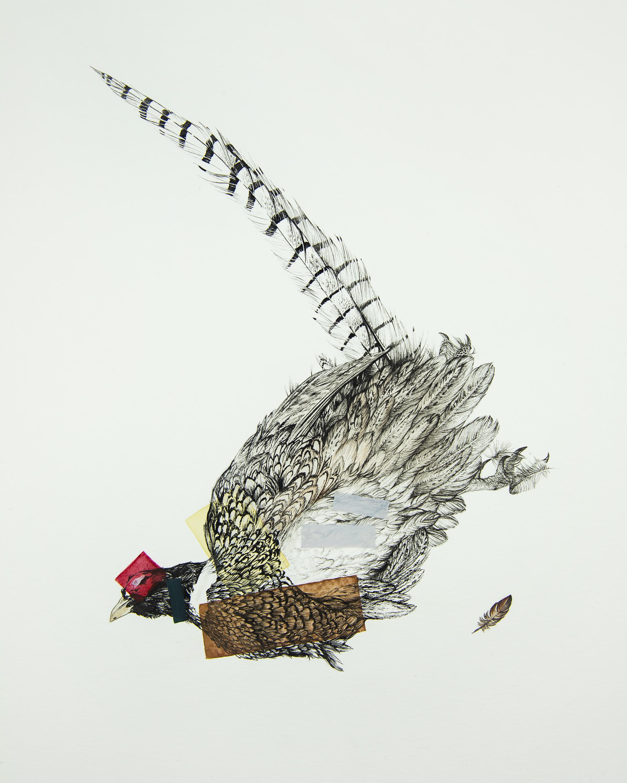 PheasantR_8x10
