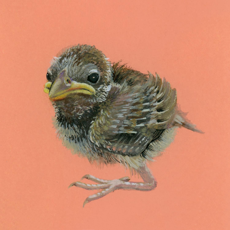 Abandoned Bird 3