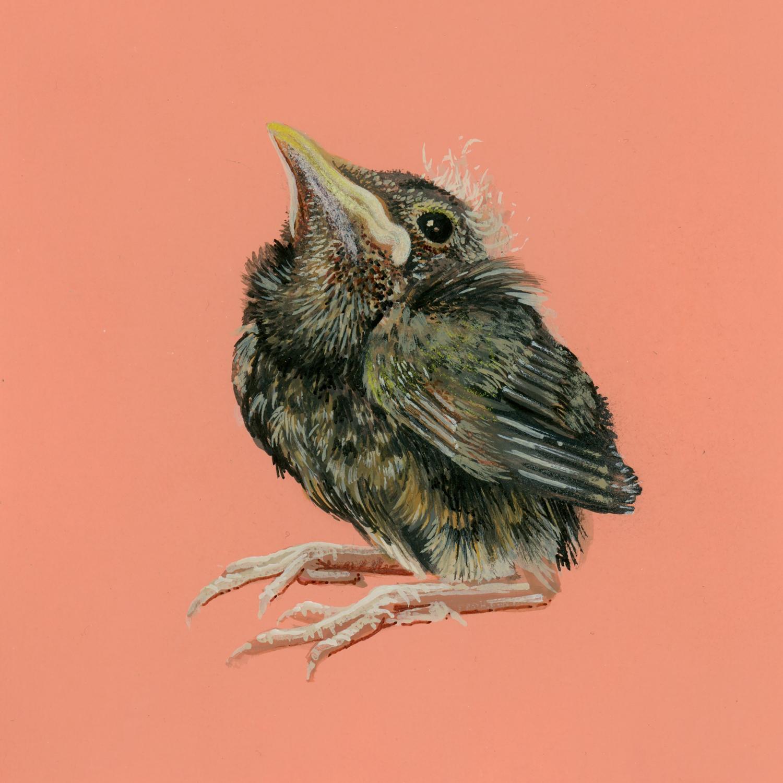 Abandoned Bird 2