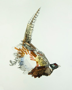 PheasantL_8x10