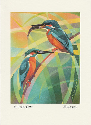 Courting Kingfishers
