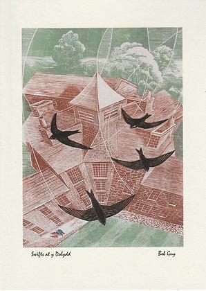 Swifts at Y Dolydd