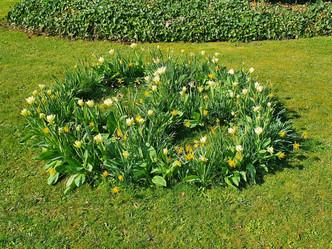 Die Hoffnung des ganzen Jahres – der Frühling