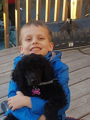 Poodles for sale Canada