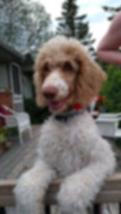 Ontario dog breeders