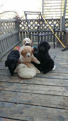 Ontrio dog breeders