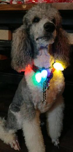 Bobob Christmas Lights