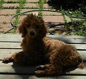 Owen sound puppies for sale colleen slack