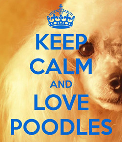 Keep Calm and Love Poodles