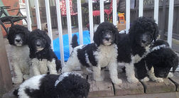 Kijji puppies for sale owen sound ontario
