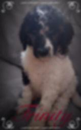 Sold puppy