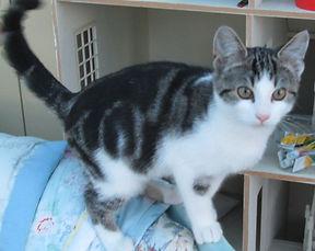 Oskey Cat.jpg