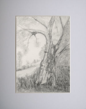 graphite pencil landscape scene with old withered tree