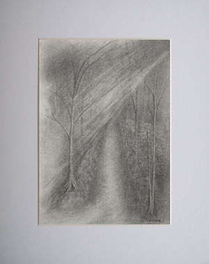 a wooded graphite landscape scene with sunlight