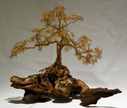 Brass Oak