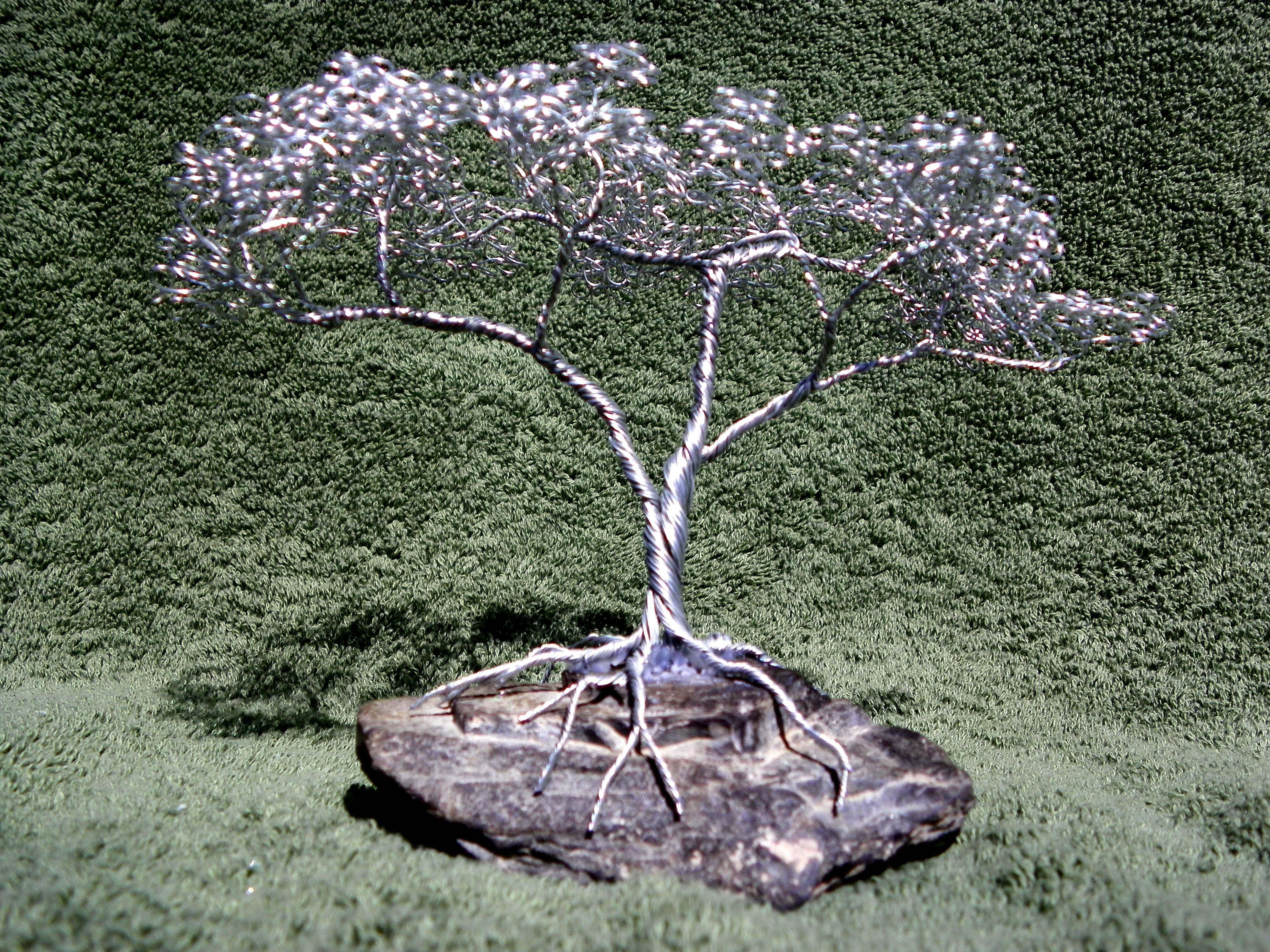 Small Acacia