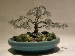 Mini Live Oak