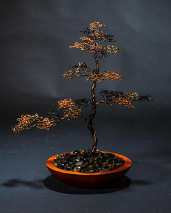 Upright Bonsai