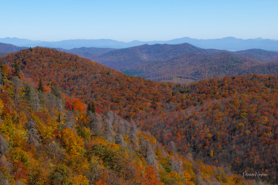 Fall from Webb Overlook