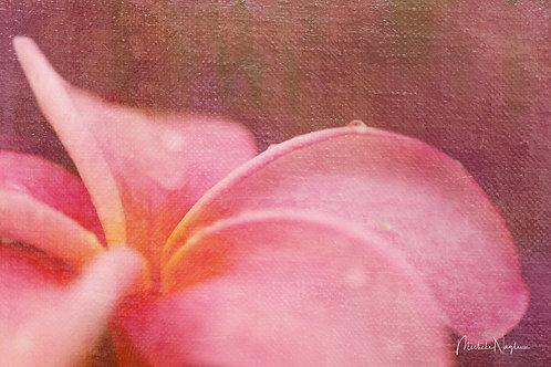 Plumeria (Limited Edition Print)