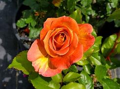 rose - rosie the riverter 2(nursery).jpg