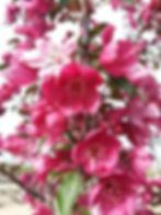 Crab Gladiator flowers.jpg