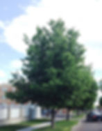 Hackberry 3_edited.jpg