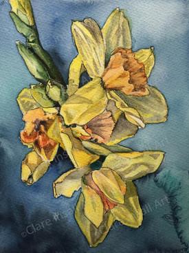 Daffodils - £45
