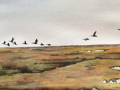 Geese over Salt Marsh
