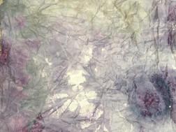 Soil + elderberry