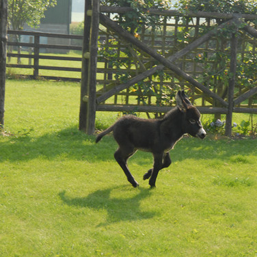 Whizzing round the garden