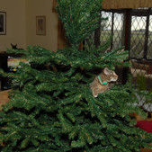 Cat's other Christmas tree