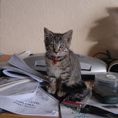 Helping with paperwork