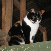 On guard in the barn