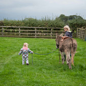 First lesson in donkey management