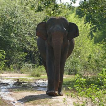 WILDLIFE TOURS IN SRI LANKA