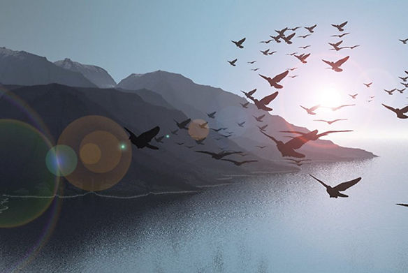 Beautyful-Scenery-Flying-Bird-Collection
