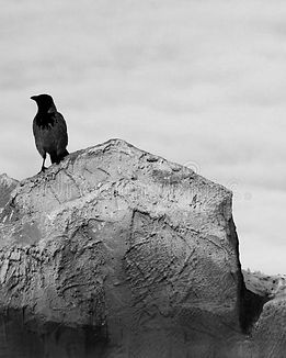 crow-sits-background-scales-nature-11011