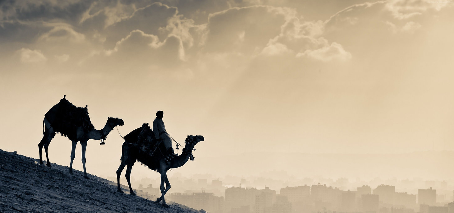 wallpaper.wiki-Camel-Background-Free-Dow