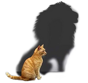lionshadow_edited_edited.png